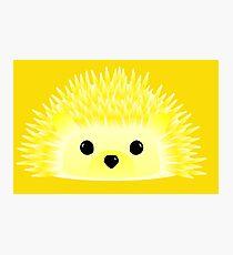 Edgy the Hedgehog Photographic Print