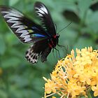 Butterfly on bloom by indiafrank