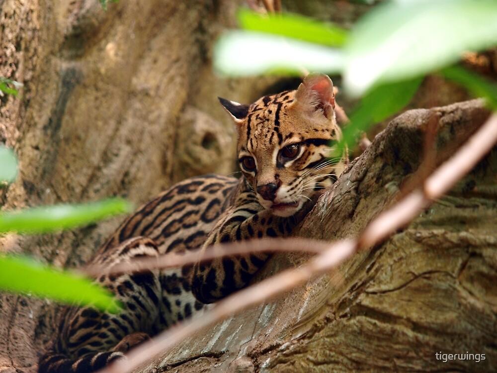Ocelot Jungle by tigerwings