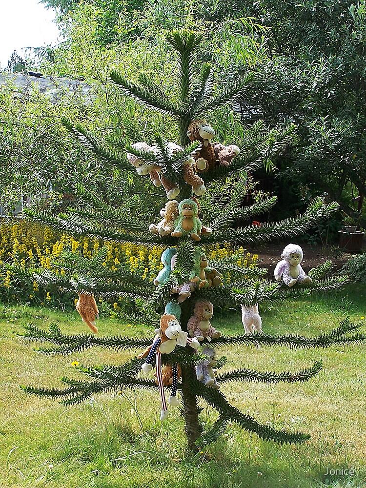 The Monkey Tree by Jonice