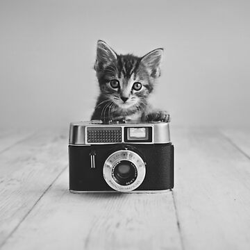 Kitten Photographer by ames777