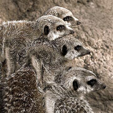 The Meerkat Mob by KarenTregoning