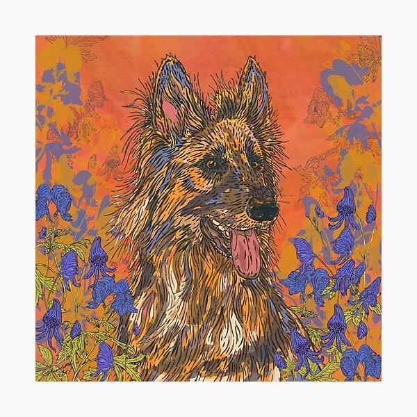 German Shepherd Dog Photographic Print
