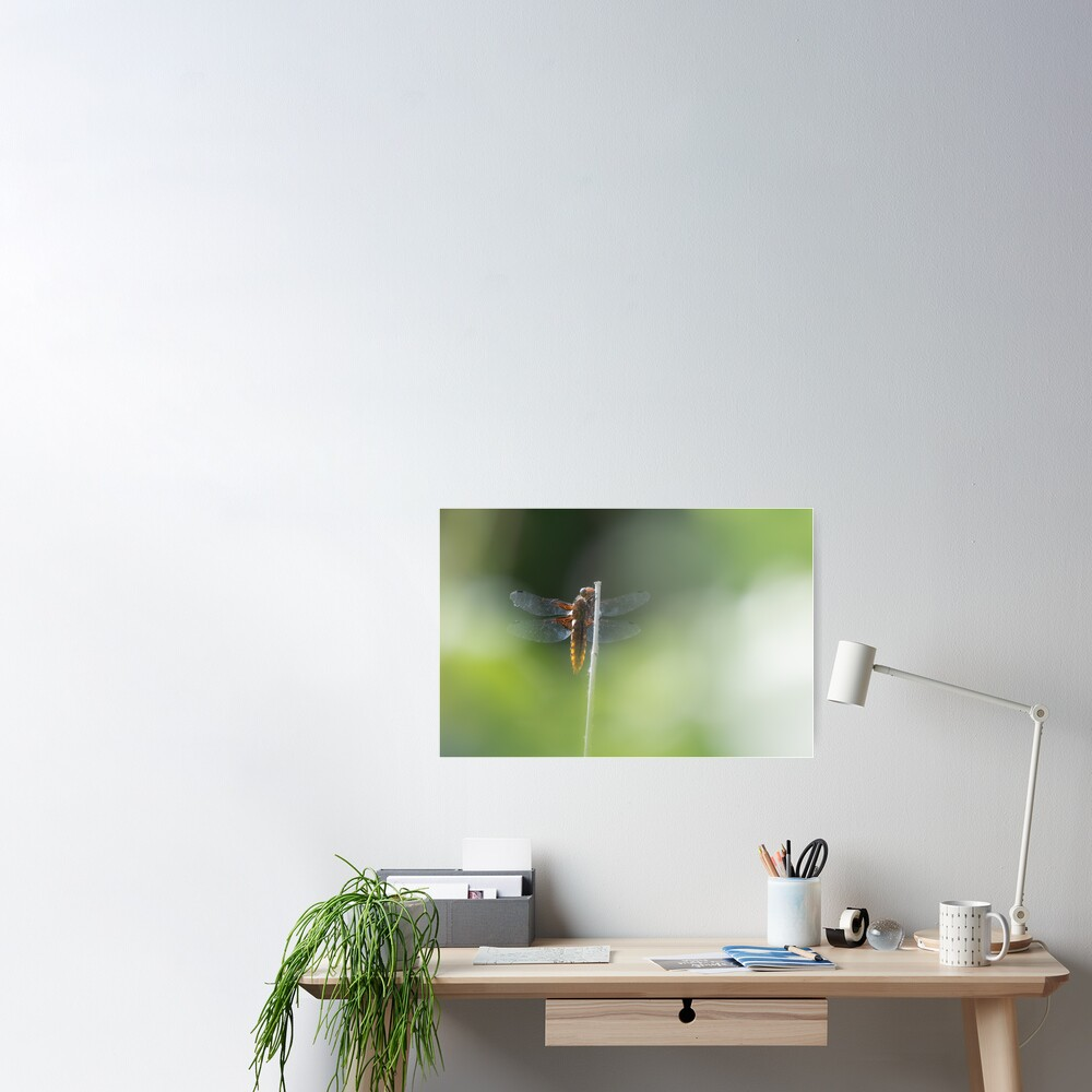 Broad bodied Chaser female Poster