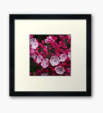 Pink Flower Macro Framed Print