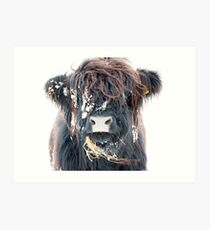 Highland Cow in Snow Art Print