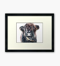 Highland Cow in Snow Framed Print