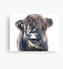 Highland Cow in Snow Metal Print
