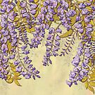 Wisteria by lottibrown