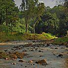 Kauai stream by milton ginos