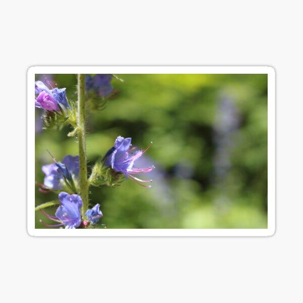 Blueweed Flower Sticker