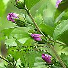 Song of Solomon 2:1 by FrankieCat