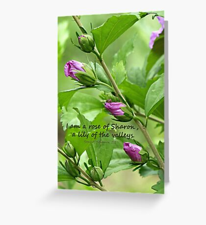 Song of Solomon 2:1 Greeting Card