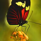 Red Beauty by Rosy Kueng Photography