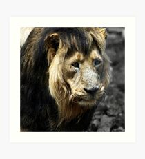Ashok the Asiatic Lion Art Print