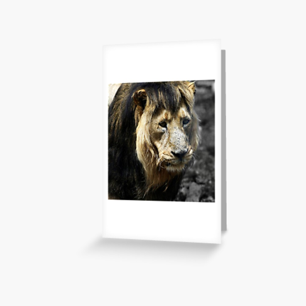 Ashok the Asiatic Lion Greeting Card