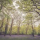 Balcombe Woods  by Unwin Photography