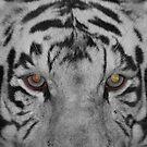 Tiger Eyes by Tim Wright