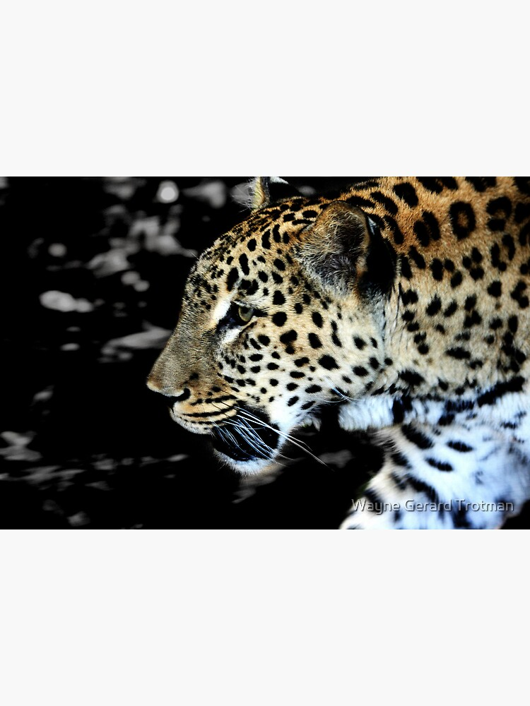 Persian Leopard by redmoondragon