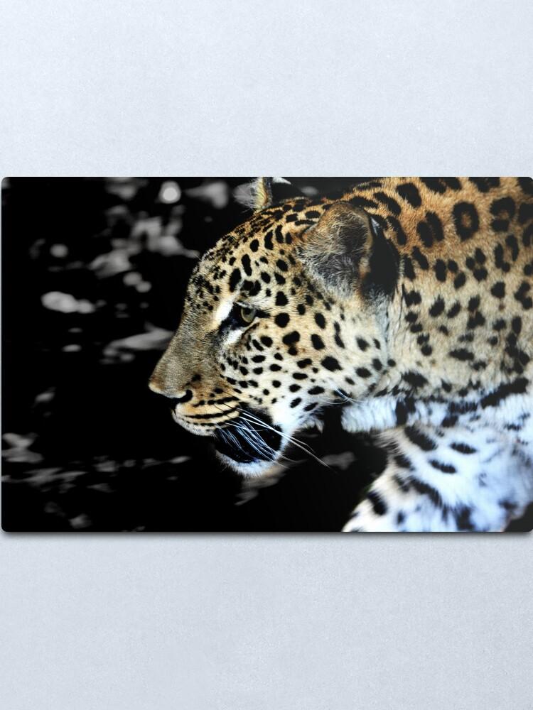 Alternate view of Persian Leopard Metal Print