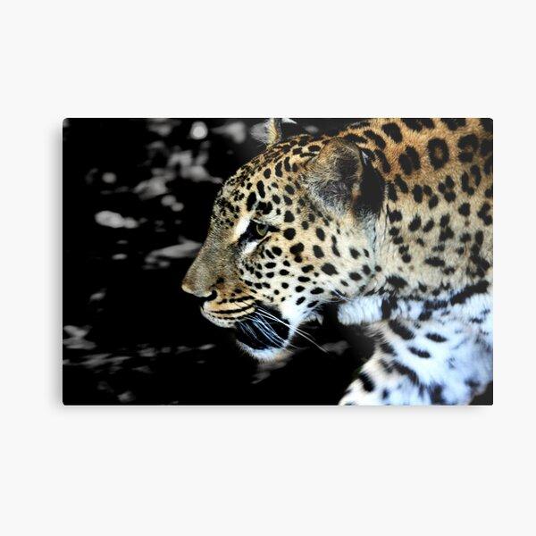 Persian Leopard Metal Print