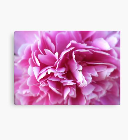 Lost In Pink Canvas Print