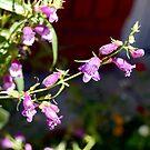 Purple Foxgloves by BellaStarr