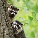 Tiny Bandits by Alyce Taylor