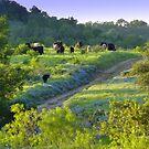 Cows amongst Bluebonnets by Vaengi