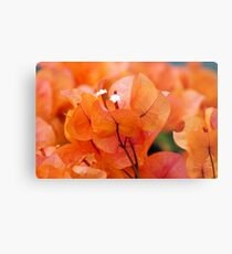 Orange Bougainville Metal Print