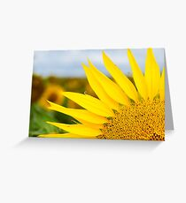 Sunflower Petals - Nobby, Australia Greeting Card