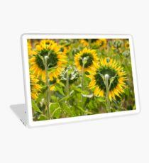 Sunflower Backs - Nobby, Australia Laptop Skin