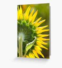 Close up of Sunflower Back - Nobby, Australia Greeting Card