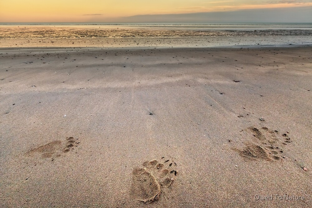 Bear Feet on the Beach by Owed To Nature
