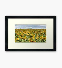 Sunflower Field - Nobby, Australia   Framed Print