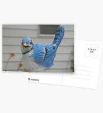 Bird in Kentucky Postcards