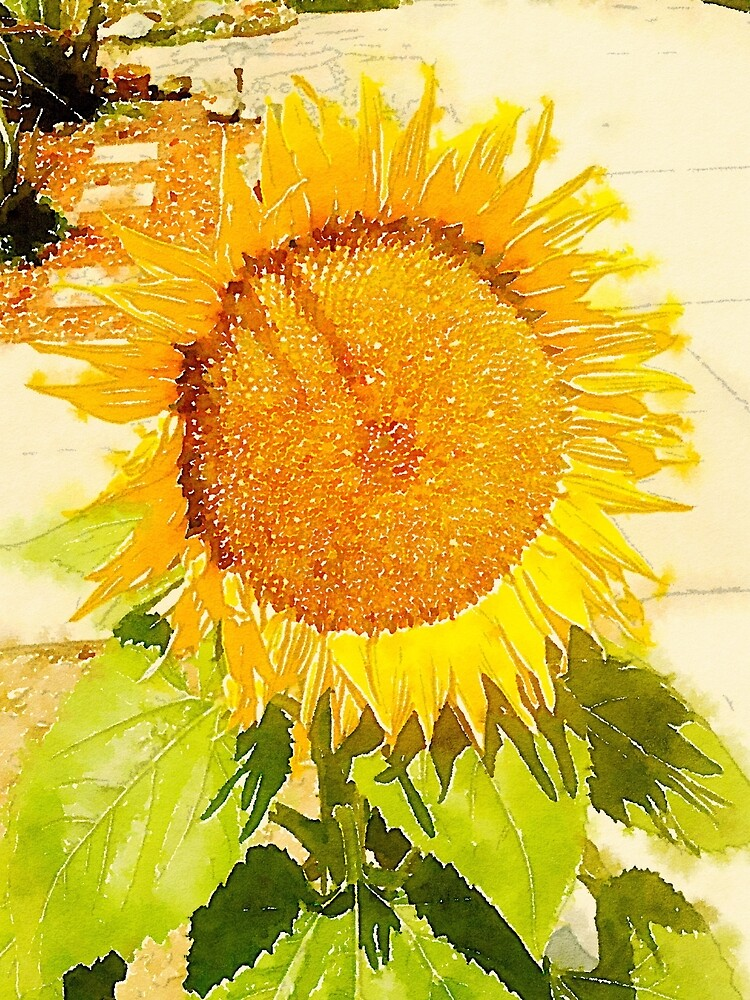 Sunflower in watercolor #2 by douglasewelch