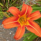 Orange beauty by Bonnie Pelton