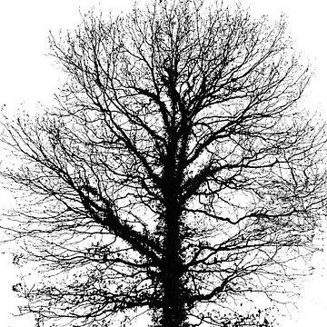 Black tree by robelf