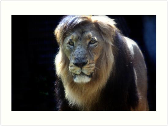 King Ashok! by Wayne Gerard Trotman