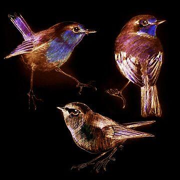 sketch of birds by denisovanv