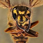 Extreme close up of a bee by Sara Sadler