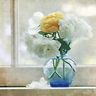 White and yellow roses by SylviaCook