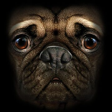 Pugs Face with Big Soulful Eyes by kleynard