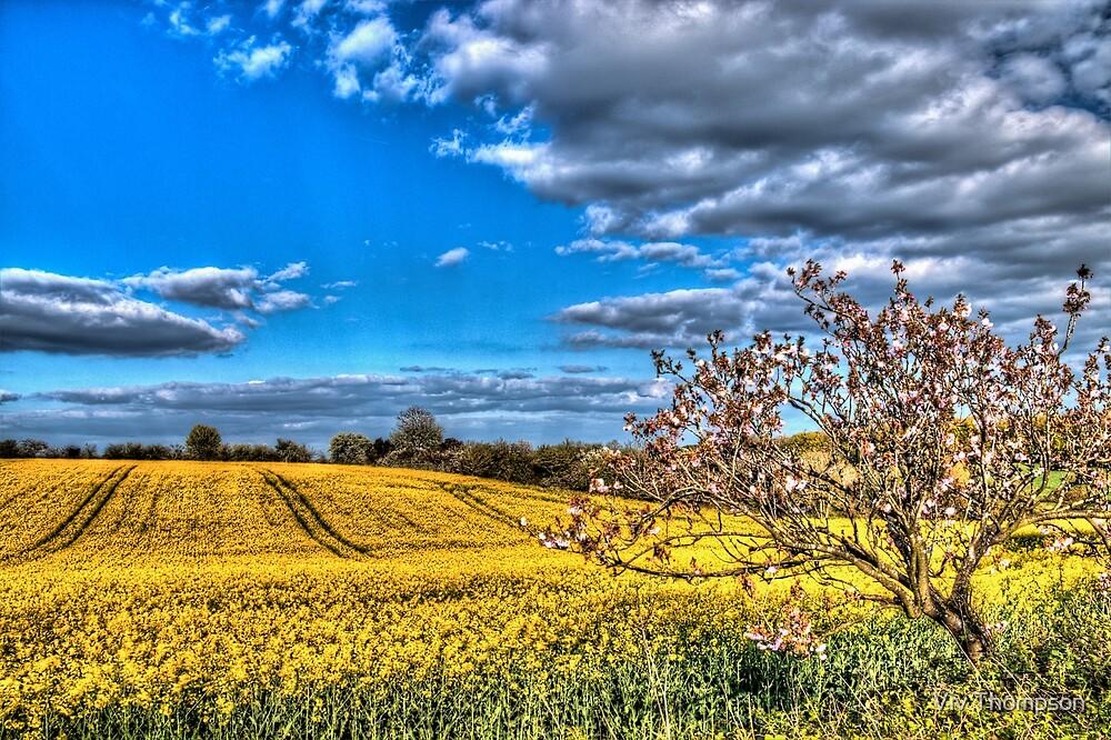 Spring fields near Hook Norton by Viv Thompson
