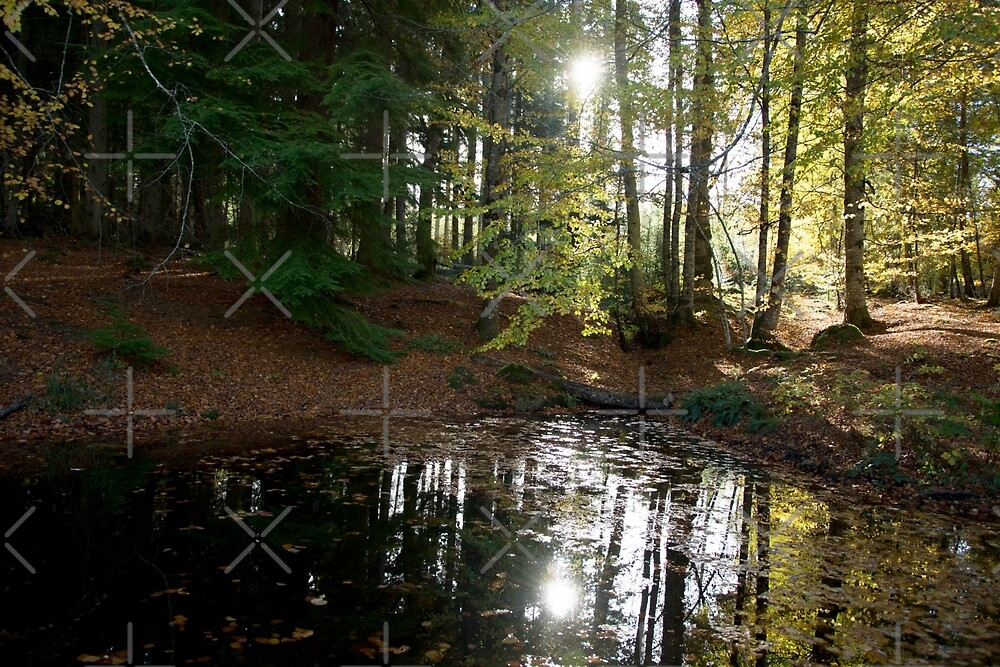 Autumn Sun by SiobhanFraser