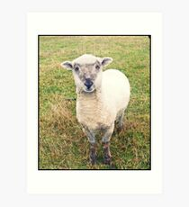 new zealand lamb Art Print
