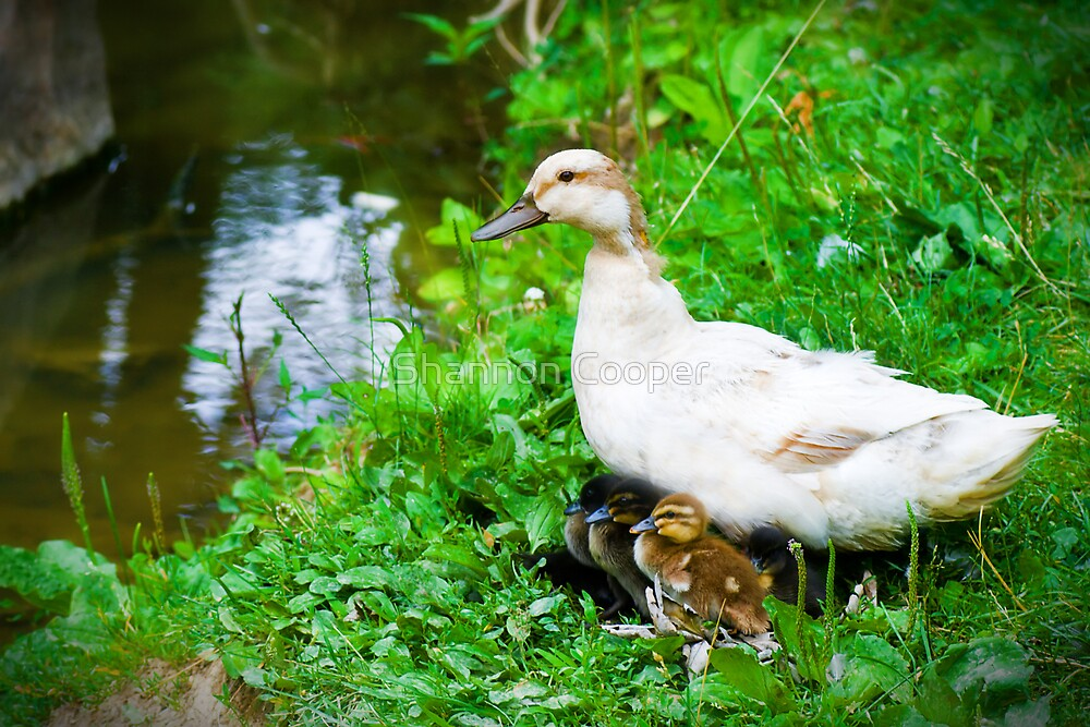 A Mothers Love by Shannon Beauford