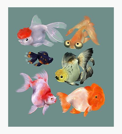 Fishies Photographic Print