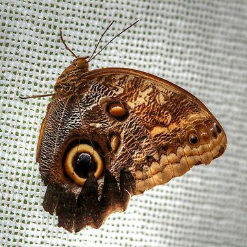 Blue Morpho Butterfly by umpa1